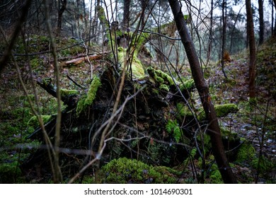 Dead tree. Roots and moss. Autumn nature. Green forest.