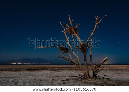 Dead Tree At The Salton Sea. Nighttime scene with a dead tree with large birds nests that still stands on the playa on the southeastern shore of the Salton Sea.