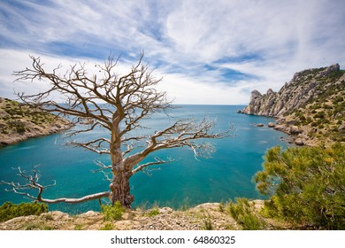 Dead tree and sea