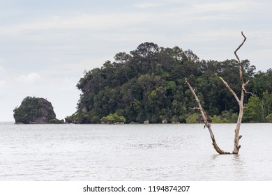 Dead tree in sea with jungle land jutting out into the water behind it at sunset.
