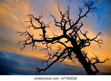 A dead tree in silhouette against a Utah sunset.