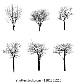 Dead tree silhouette isolated on white background
