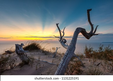 A dead tree is silhouetted against sunset rays over Lake Michigan at Sleeping Bear Dunes National Lakeshore in northern Michigan