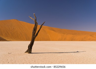 Dead tree at Sossusvlei with shadow and sand dunes