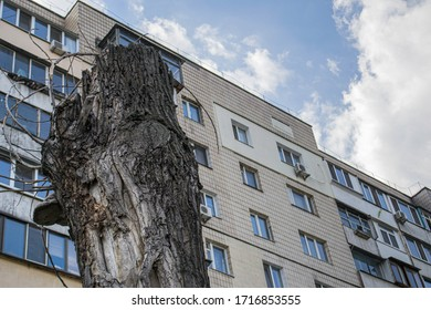 Dead tree. Stump. Against the background of an old Soviet apartment building. Residential area