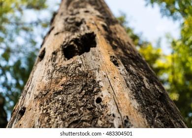 Dead Tree Stump in Forest- Macro
