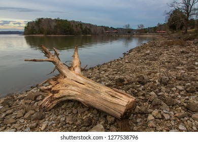 Dead tree stump on the shore of a dam