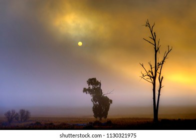 DEAD TREE.  Sun struggles to burn through a thick bank of fog in the foothills of the Natal Drakensberg, Kwazulu Natal, South Africa.