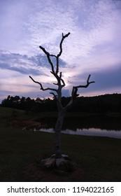 dead tree with sunlight