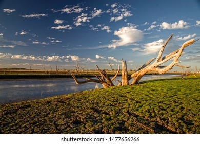 Dead tree at the swamp of Lake Argyle at sunset with blue sky as background at the outback in Australia - wallpaper