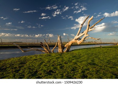 Dead tree at the swamp of Lake Argyle at sunset with blue sky as background at the outback in Australia – wallpaper