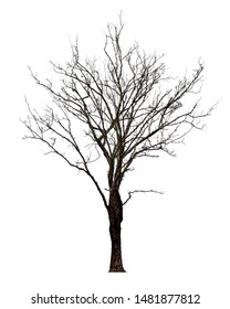 The dead tree that is completely separated from the background with perfection Can be used in many ways