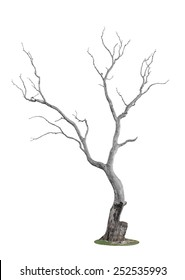 dead tree with trace of fire isolated on white background