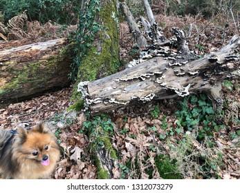 dead tree trinc with mushrooms