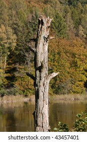 Dead tree trunk in autumn landscape with a lake in the background