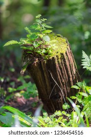 Dead tree trunk is letting rebirth of moss, herbs and new plants.