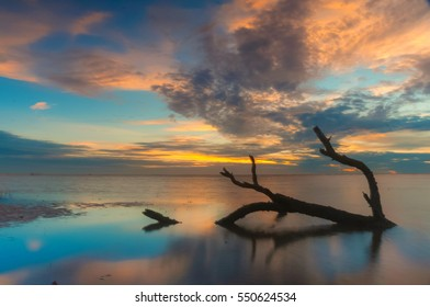A dead tree trunk lies on a remote and desolated beach. This photo may contain blur image due to long expposure shoot.