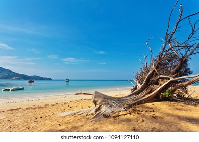 Dead tree trunk on tropical beach