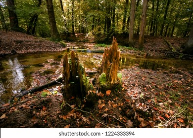 Dead tree trunks with ferns and young green leaves in an autumn scene