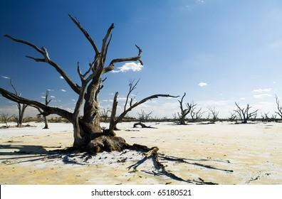 Dead tree trunks and limbs on a white salt lake under blue sky