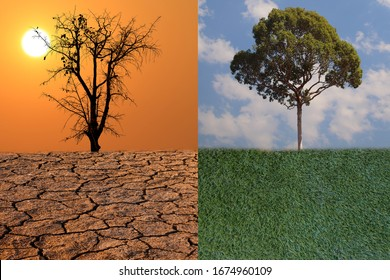 Dead tree under fantastic evening sunset is standing on cracked earth. Green tree under cloud is standing on fresh grass. Concept of Global warming. Save the environment. Concept of climate change.