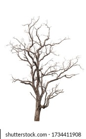 Dead tree in the white background