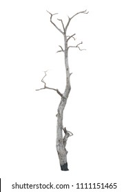 Dead tree without leaves isolated on a white background with clipping path