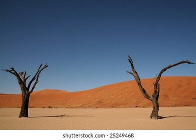 Dead trees amongst the sand dunes of Namibia