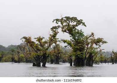 Dead trees with bromeliads in the nature reserve Cuyabeno, Amazonia, Oriente, Ecuador./Dead trees with bromeliads