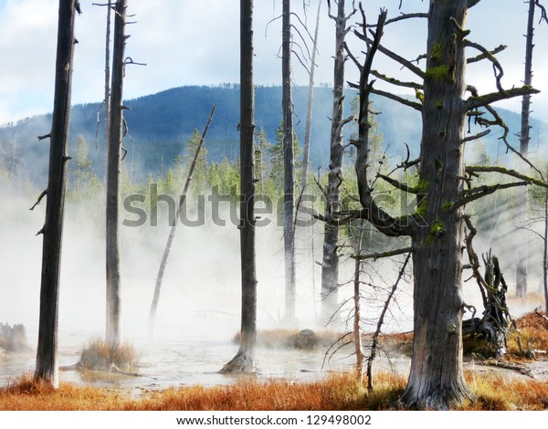 dead trees caused by sulfuric soil condition in a geothermal area, Yellowstone National Park, Wyoming, United States