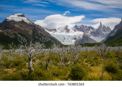 Dead trees with Cerro Torre in the back in Los Glaciares National Park in Patagonia, Argentina  d