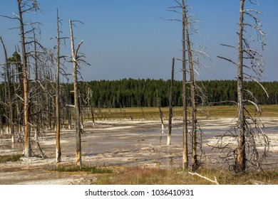 Dead trees due to sulfur