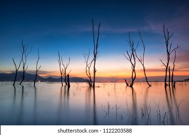 Dead Trees in the forest around a lake with Sunset at chonburi , Thailand. dead tree sticking out of the water from Lake. Cloud movement with dead trees on the dam at sunrise