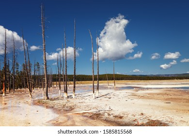 Dead trees in Fountain Paint Pot is a mud pot located in Lower Geyser Basin in Yellowstone National Park, Wyoming, USA