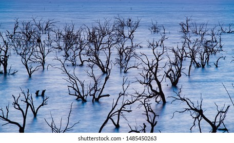 dead trees in Lake Pamamaroo
