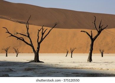 Dead trees in Namibia's famous clay pans contrasted against the sand dunes behind.