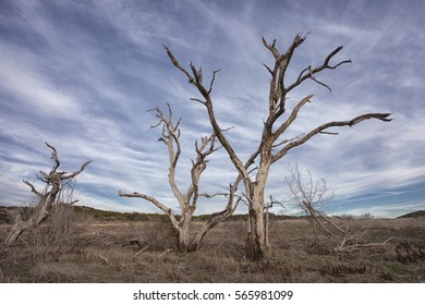 Dead Trees in nature