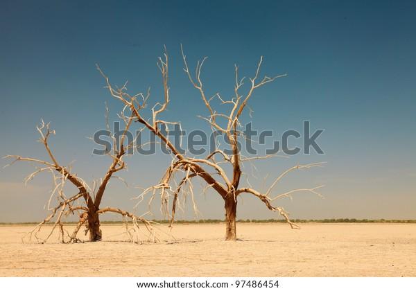 Dead trees at Salton Sea, California, USA