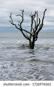 Dead trees in sea in Botany Bay Plantation Heritage Preserve and Wildlife Management Area on Edisto Island in South Carolina USA