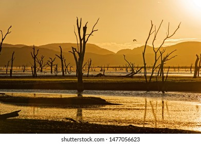 Dead trees at the swamp of Lake Argyle at twilight with yellow evening light at the outback in Australia – wallpaper