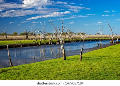 Dead trees at the swamp of Lake Argyle at sunset with blue sky as background at the outback in Australia – wallpaper