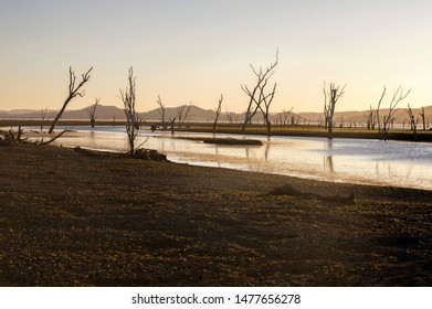 Dead trees at the swamp of Lake Argyle at sunset with clear sky as background at the outback in Australia – wallpaper