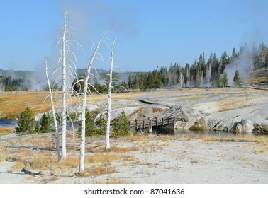 dead trees in the Upper Geyser Basin