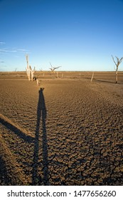 Dead trees at the wasteland of Lake Argyle at sunset with blue sky as background at the outback in Australia with long shadow of photographer – art style