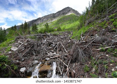 Dead trees and water falls in Glacier national park