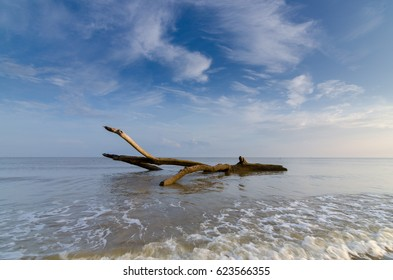 Dead trunk in the sea with blue sky in the background