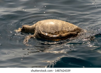 Dead turtle with head cut off with boat propeller - Animal Rights Cruelty