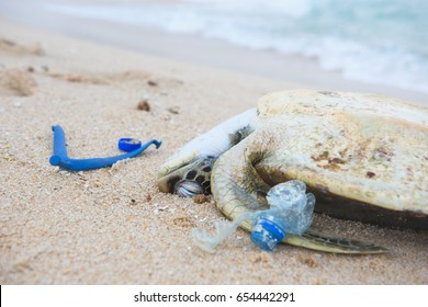 Dead turtle with a plastic garbage on ocean beach