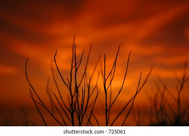 Dead twigs at sunset