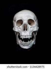 Dead vampire. Human skull with vampire fangs. Black background. Gloomy concept free space